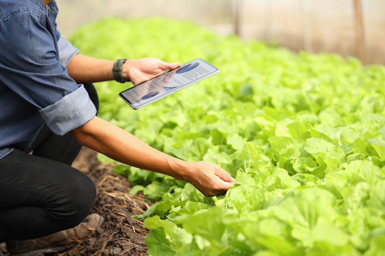 smart-farmers-are-monitoring-plant-growth-to-keep-up-with-customer-needs